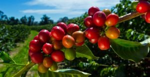 coffee producers and manufacturers