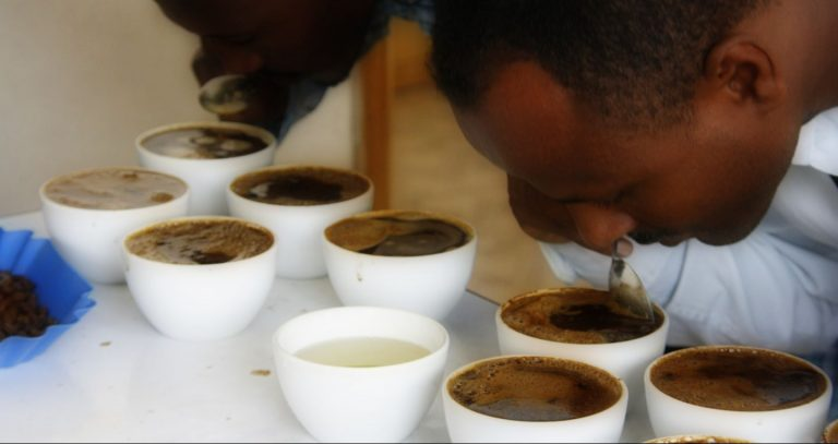 coffee_cupping