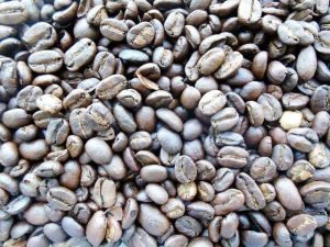 kopi luwak is the most expensive coffee in the world