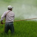 The harmful role of pesticides and how to minimise their impact 2