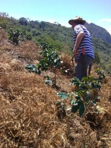 coffee farmers face soil preservation