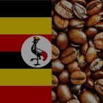 Coffee Producing Countries - Uganda 3