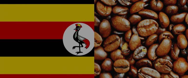 Coffee Producing Countries – Uganda