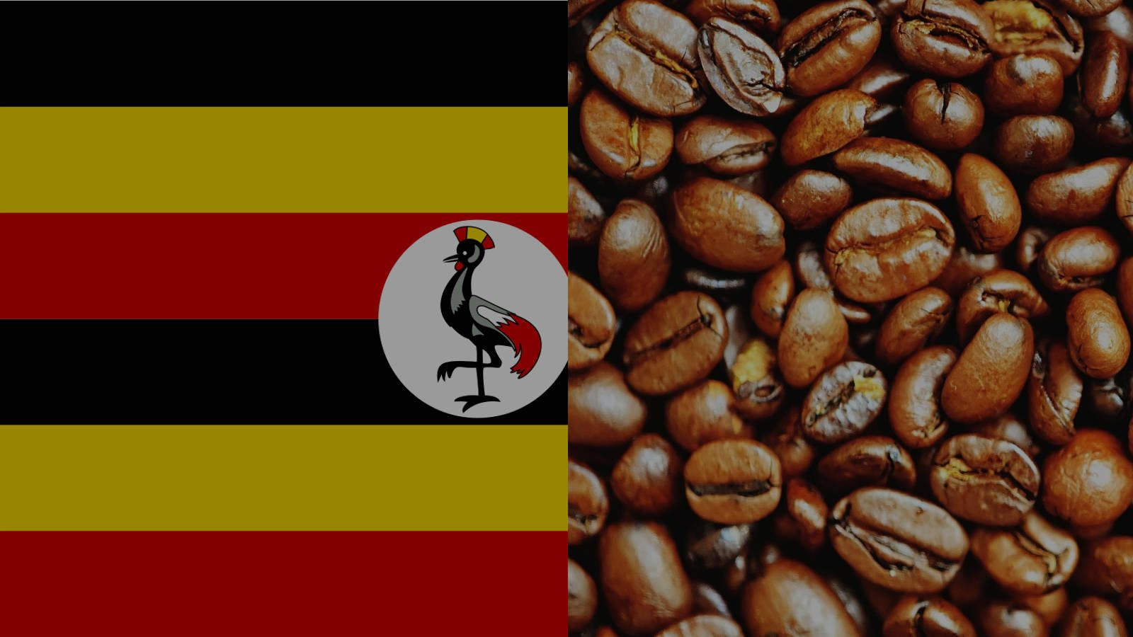 Coffee Producing Countries – Uganda